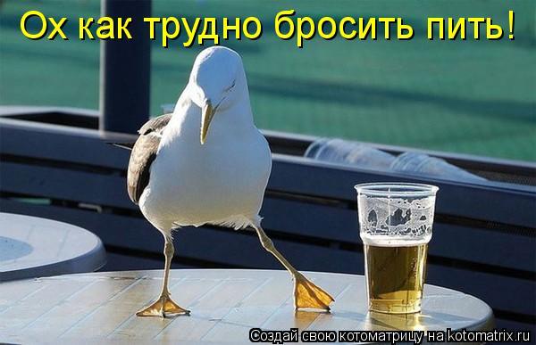 Котоматрица: Ох как трудно бросить пить!