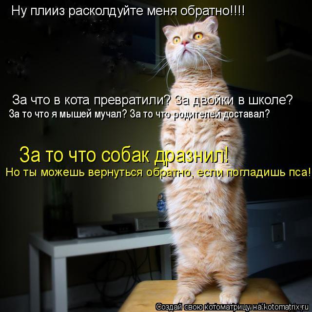 Котоматрица: Ну плииз расколдуйте меня обратно!!!! За что в кота превратили? За двойки в школе? За то что я мышей мучал? За то что родителей доставал? За то ч