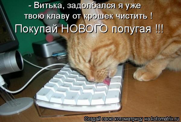 Котоматрица - - Витька, задолбался я уже твою клаву от крошек чистить ! Покупай НОВО