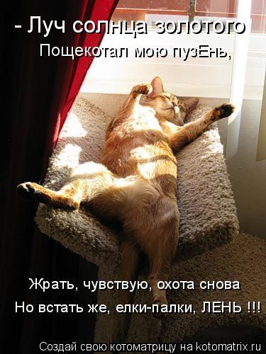 Котоматрица: - Луч солнца золотого Пощекотал мою пузЕнь, Жрать, чувствую, охота снова Но встать же, елки-палки, ЛЕНЬ !!!