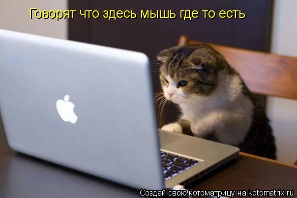 Котоматрица: Говорят что здесь мышь где то есть