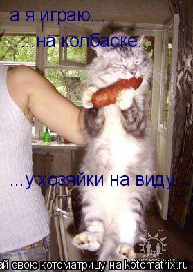 Котоматрица: а я играю... ...на колбаске... ...у хозяйки на виду...