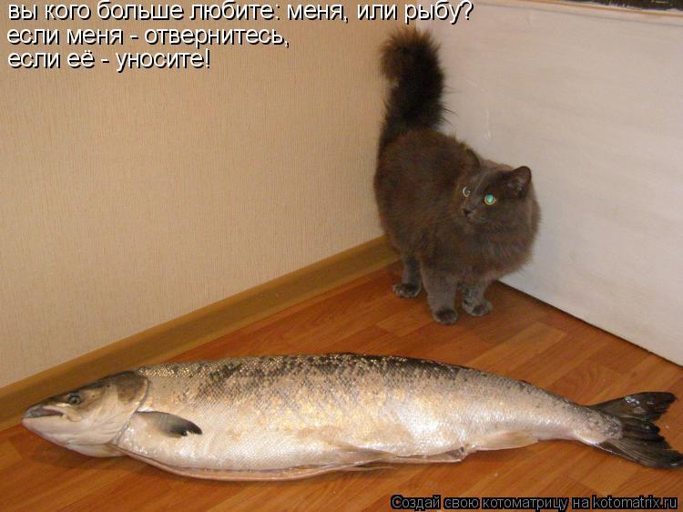 Котоматрица: вы кого больше любите: меня, или рыбу? если меня - уходите, и не мешайте если меня - отвернитесь, если её - уносите!