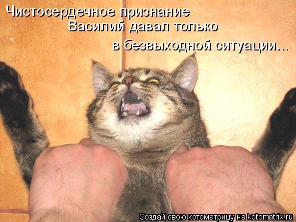Котоматрица: Чистосердечное признание Василий давал только в безвыходной ситуации...
