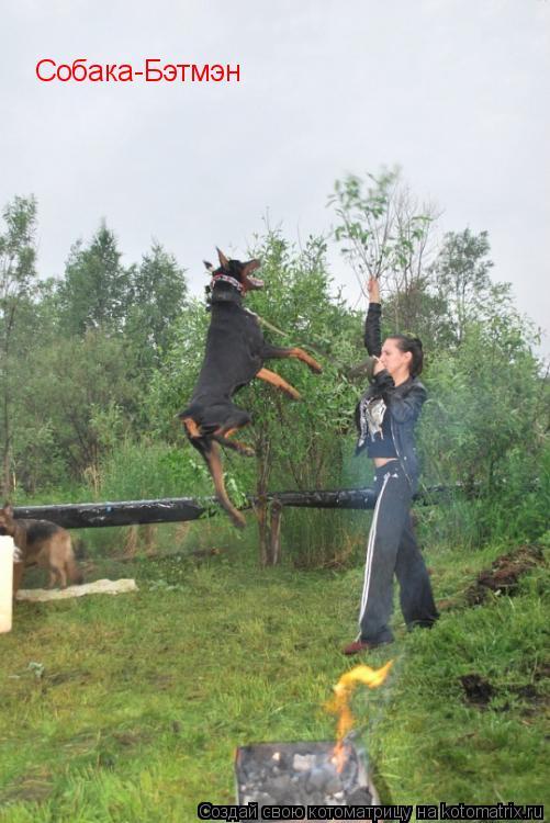 Котоматрица: Собака-Бэтмэн