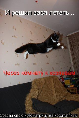 Котоматрица: И решил вася летать... Через комнату к хозяевам