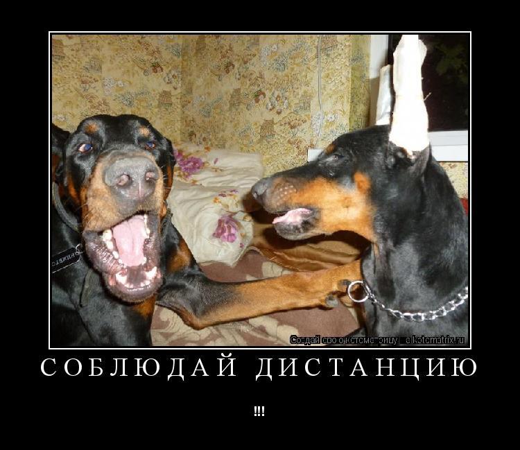 Котоматрица: Соблюдай дистанцию !!!