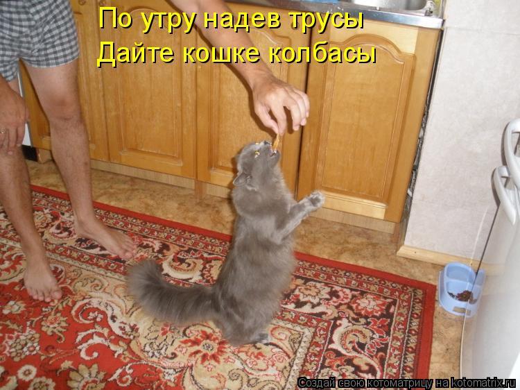 Котоматрица: По утру надев трусы Дайте кошке колбасы
