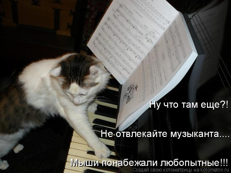 Котоматрица: Ну что там еще?!    Не отвлекайте музыканта....  Мыши понабежали любопытные!!!