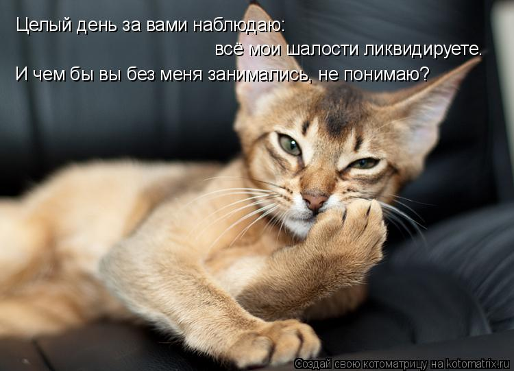 Котоматрица - Целый день за вами наблюдаю: И чем бы вы без меня занимались, не поним