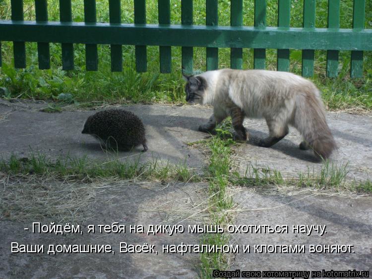 Котоматрица: Ваши домашние, Васёк, нафталином и клопами воняют. - Пойдём, я тебя на дикую мышь охотиться научу.