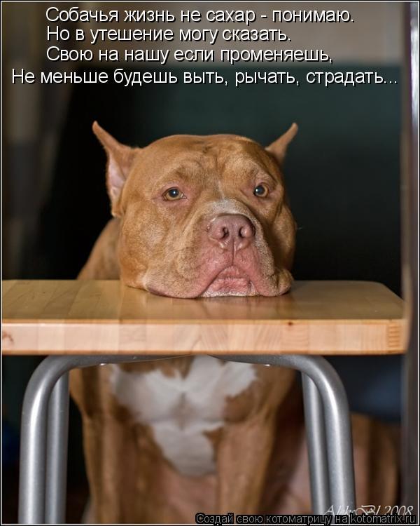 Котоматрица: Собачья жизнь не сахар - понимаю. Но в утешение могу сказать. Свою на нашу если променяешь, Не меньше будешь выть, рычать, страдать...