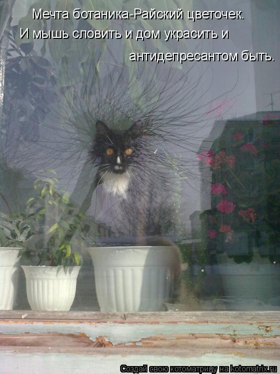 Котоматрица: Мечта ботаника-Райский цветочек. И мышь словить и дом украсить и  антидепресантом быть.