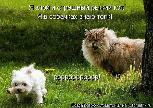 Котоматрица: Я злой и страшный рыжий кот. Я в собачках знаю толк! рррррррррррр!