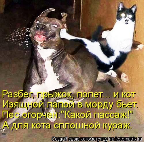 """Котоматрица: Разбег, прыжок, полет... и кот  Изящной лапой в морду бьет. Пес огорчен:""""Какой пассаж!"""" А для кота сплошной кураж."""
