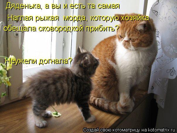 http://kotomatrix.ru/images/lolz/2012/01/30/1097320.jpg