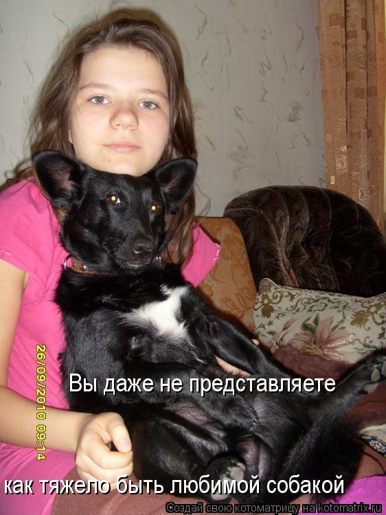 Котоматрица: Вы даже не представляете  как тяжело быть любимой собакой
