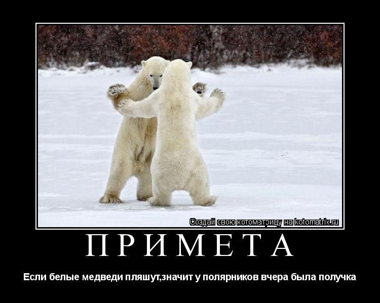 Котоматрица: Примета Если белые медведи пляшут,значит у полярников вчера была получка