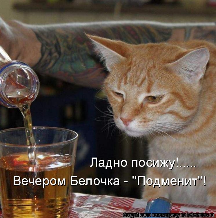 """Котоматрица: Ладно посижу!..... Вечером Белочка - """"Подменит""""!"""