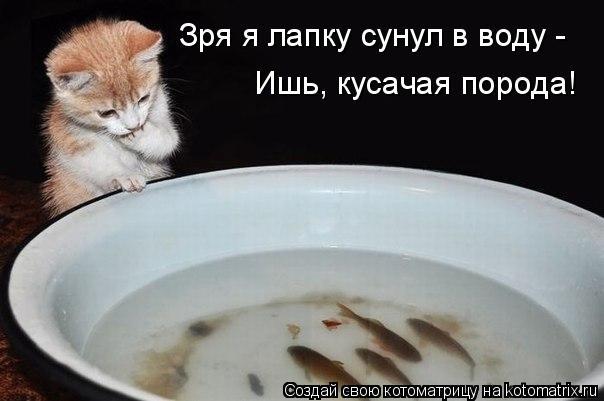 Котоматрица - Зря я лапку сунул в воду -  Ишь, кусачая порода!