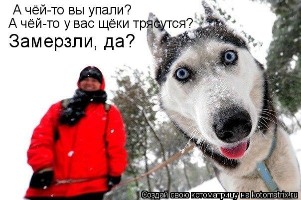 Котоматрица: А чёй-то вы упали? А чёй-то у вас щёки трясутся? Замерзли, да?