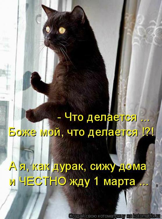 Котоматрица: Боже мой, что делается !?! - Что делается ... А я, как дурак, сижу дома и ЧЕСТНО жду 1 марта ...