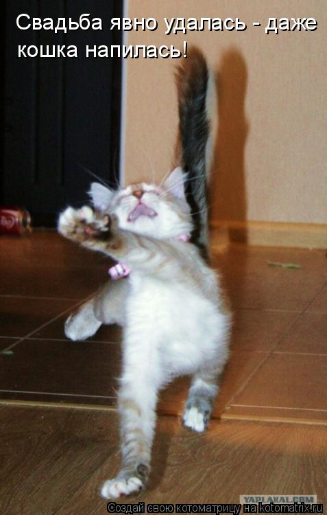 Котоматрица: Свадьба явно удалась - даже  кошка напилась!