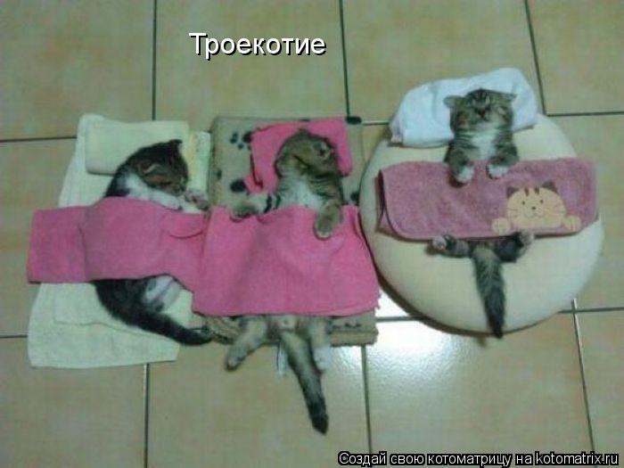 Котоматрица: Троекотие