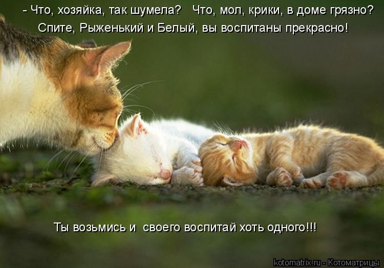 Котоматрица - Спите, Рыженький и Белый, вы воспитаны прекрасно! Ты возьмись и  своег