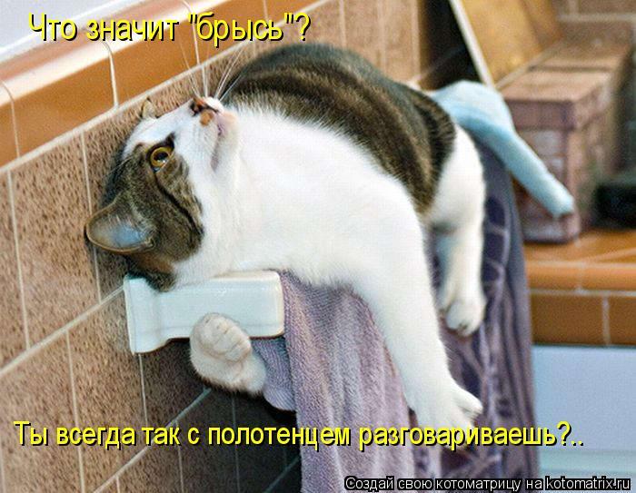"""Котоматрица - Что значит """"брысь""""? Ты всегда так с полотенцем разговариваешь?.."""