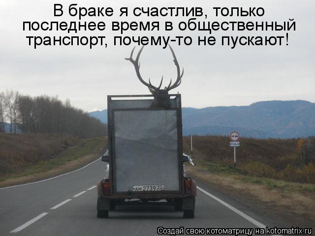 Котоматрица: В браке я счастлив, только  последнее время в общественный  транспорт, почему-то не пускают!