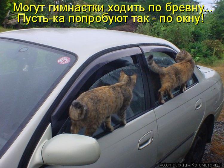 Котоматрица: Могут гимнастки ходить по бревну... Пусть-ка попробуют так - по окну!