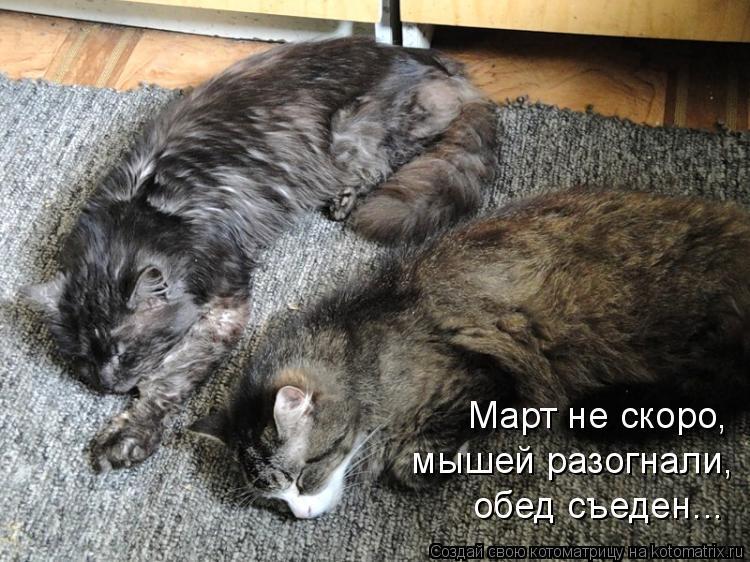 Котоматрица: мышей разогнали, Март не скоро, обед съеден...