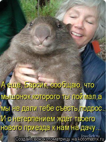 Котоматрица - А ещё, Барсик, сообщаю, что мышонок,которого ты поймал,а мы не дали те