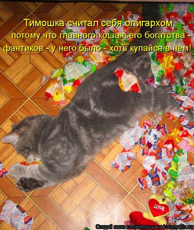 Котоматрица - Тимошка считал себя олигархом, потому что главного кошачьего богатства