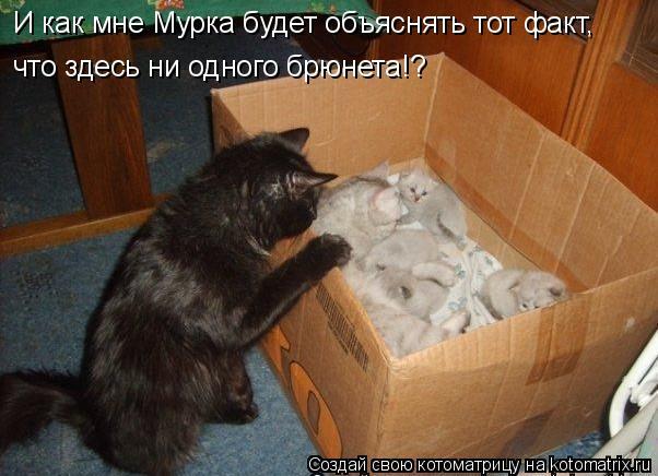Котоматрица: И как мне Мурка будет объяснять тот факт, что здесь ни одного брюнета!?