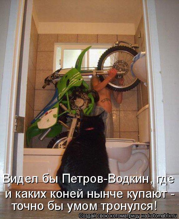 Котоматрица - Видел бы Петров-Водкин, где и каких коней нынче купают - точно бы умом