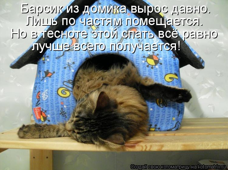 Котоматрица - Но в тесноте этой спать всё равно лучше всего получается! Барсик из до