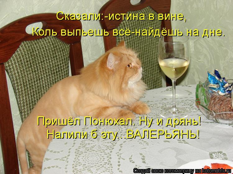 Котоматрица - Сказали:-истина в вине, Коль выпьешь всё-найдёшь на дне. Пришёл Понюха