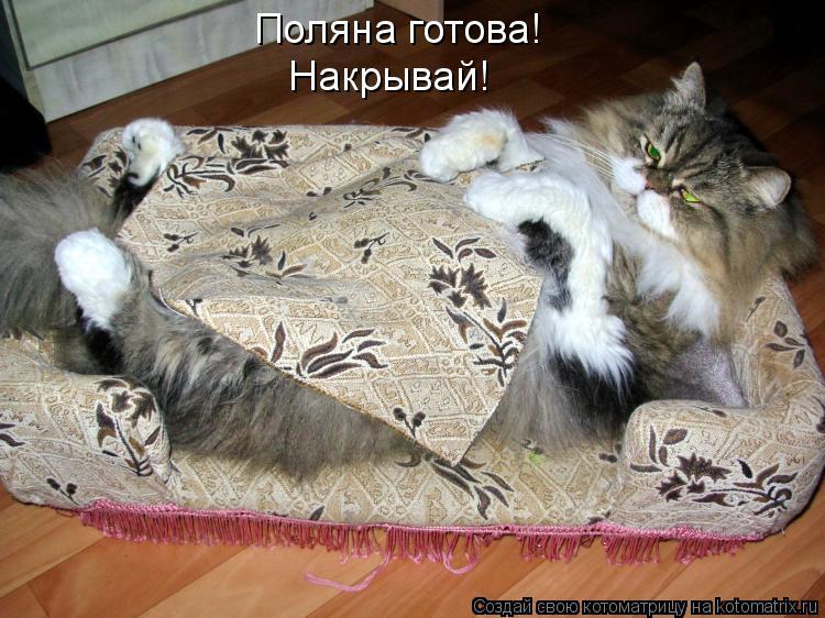 Котоматрица - Поляна готова! Накрывай!
