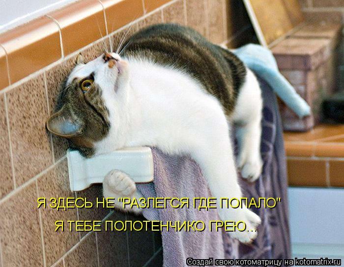 """Котоматрица - Я ЗДЕСЬ НЕ """"РАЗЛЕГСЯ ГДЕ ПОПАЛО"""" Я ТЕБЕ ПОЛОТЕНЧИКО ГРЕЮ..."""