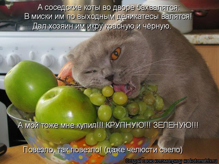 Котоматрица - А соседские коты во дворе бахвалятся:  В миски им по выходным деликате