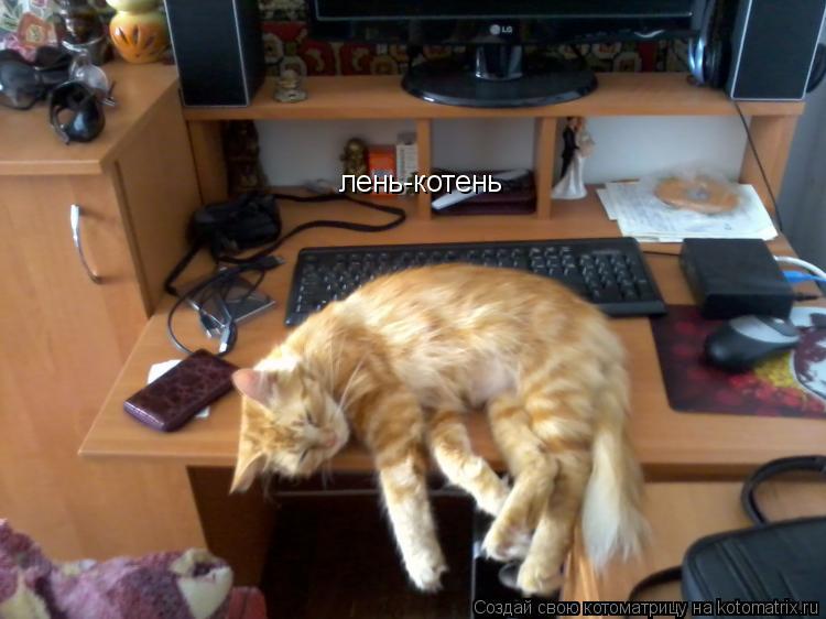 Котоматрица: лень-котень
