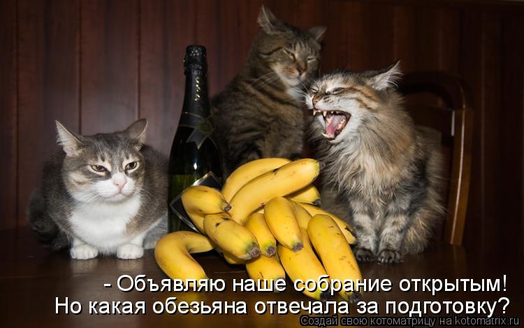 Котоматрица - Но какая обезьяна отвечала за подготовку? - Объявляю наше собрание отк
