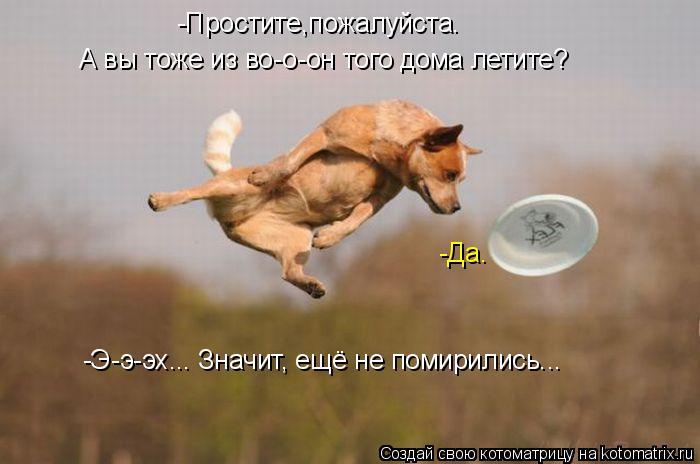 Котоматрица - -Простите,пожалуйста. А вы тоже из во-о-он того дома летите? -Да. -Э-э