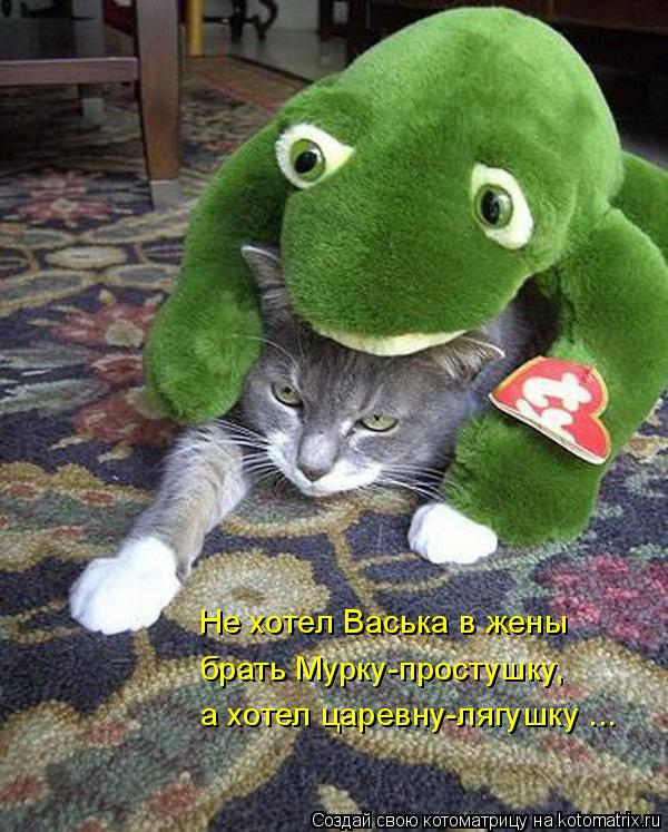 Котоматрица: Не хотел Васька в жены  брать Мурку-простушку, а хотел царевну-лягушку ...