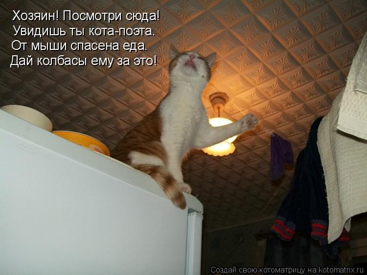 Котоматрица: Хозяин! Посмотри сюда! Увидишь ты кота-поэта. От мыши спасена еда. Дай колбасы ему за это!