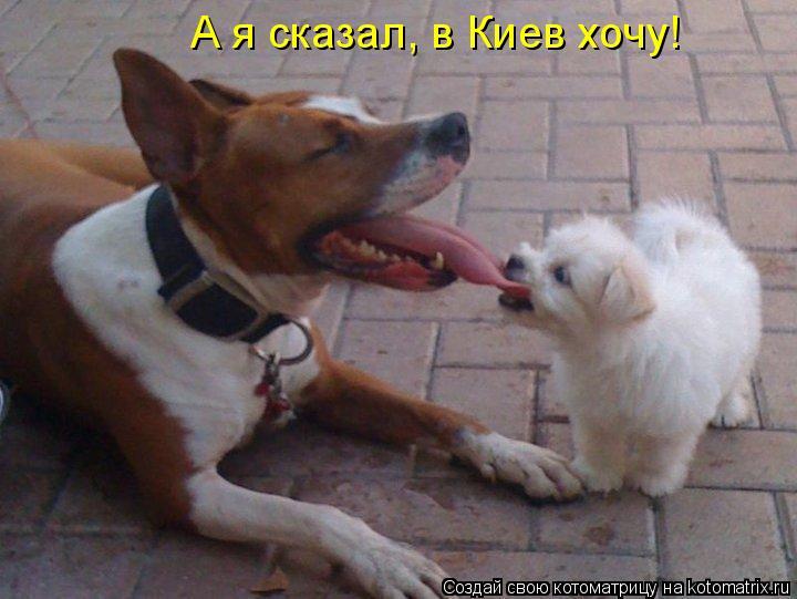 Котоматрица: А я сказал, в Киев хочу!