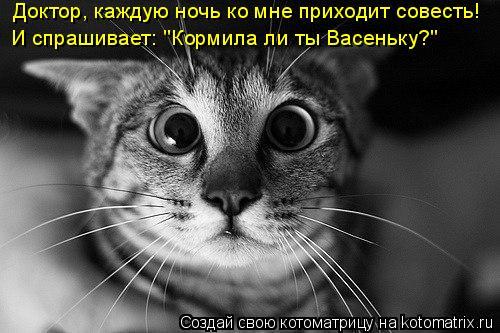 """Котоматрица: Доктор, каждую ночь ко мне приходит совесть! И спрашивает: """"Кормила ли ты Васеньку?"""""""