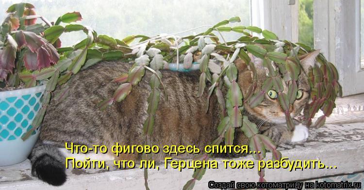 Котоматрица: Что-то фигово здесь спится... Пойти, что ли, Герцена тоже разбудить...